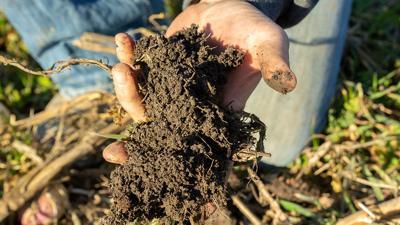Cover crop soil close up