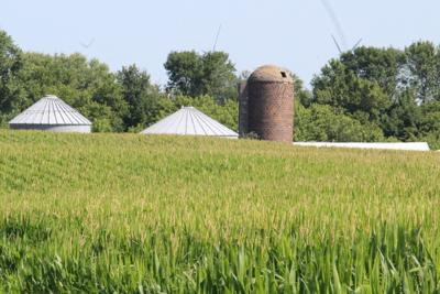 Southern MN Corn