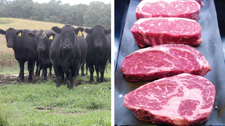 Cattle and beef
