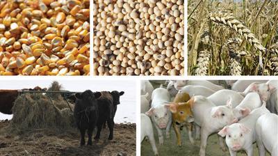 Grain livestock 5 image graphic