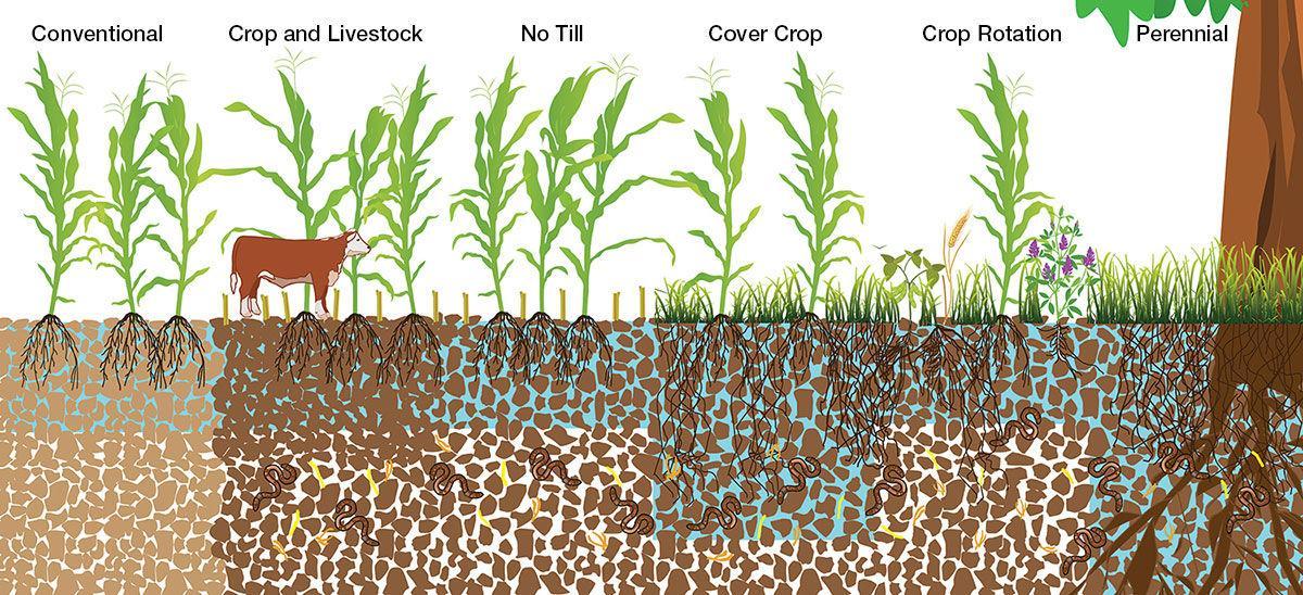 Soil profiles cover crops