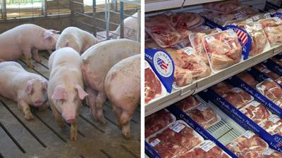 Pigs and pork