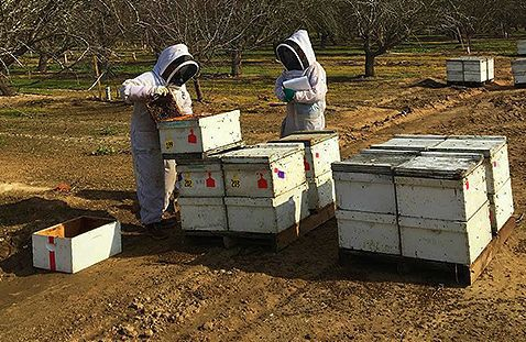 Scientists work with honey-bee colonies