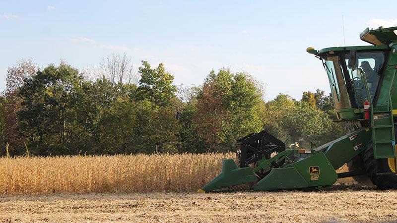 Bill Bruer soybean harvest