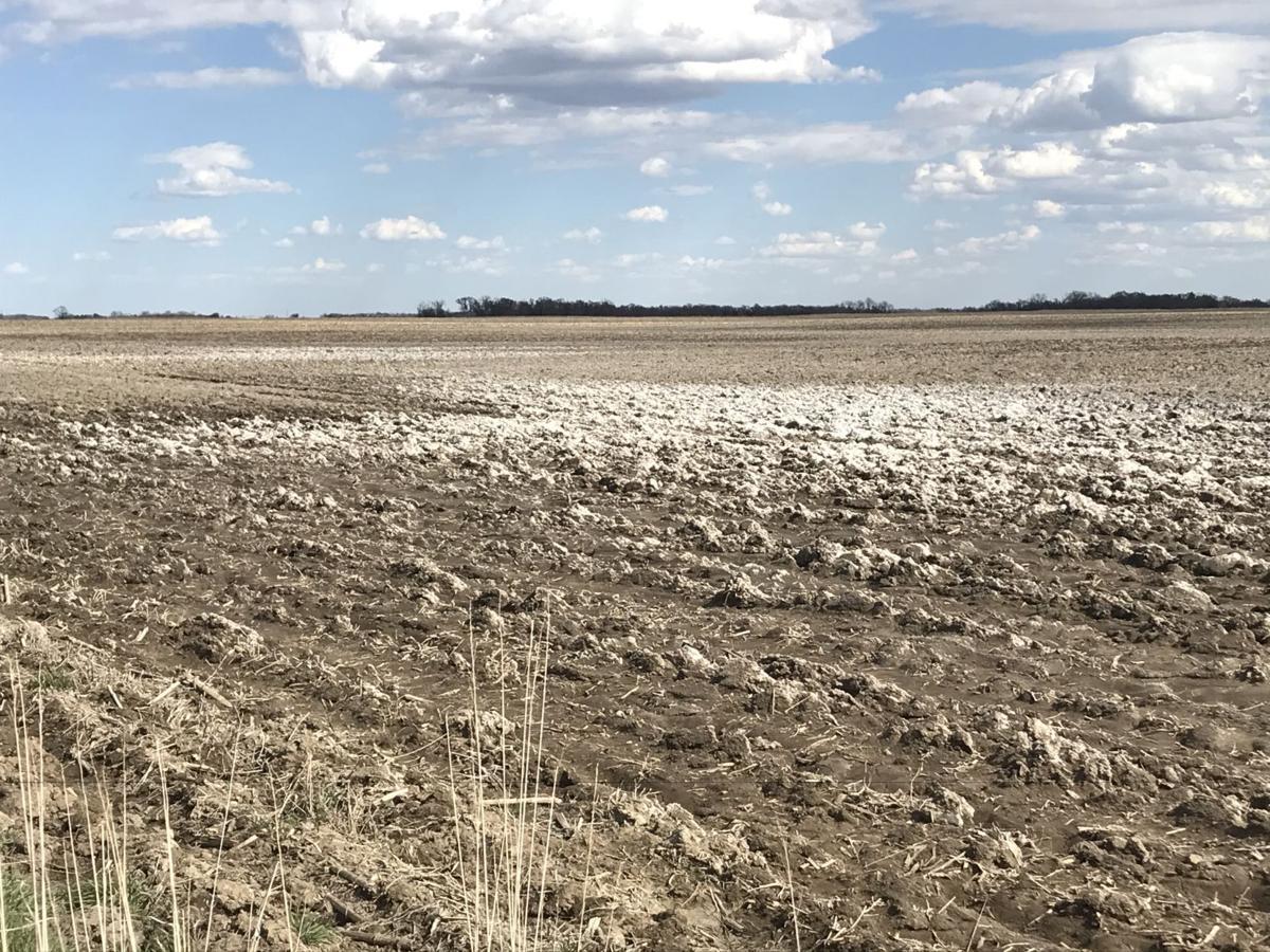 Saline soils