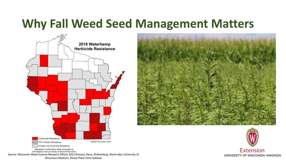 Why Fall Weed Seed Management Matters