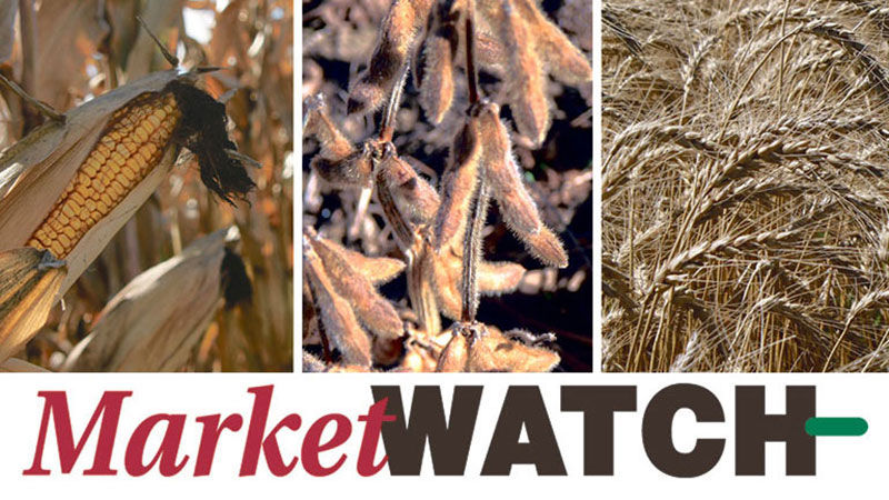 Market Watch Grain