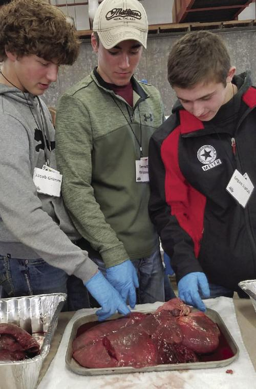 Youth Leadership Derby boys dissect