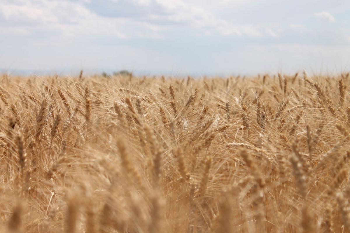 crop report