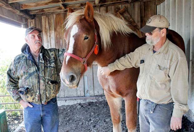 Ken Gill - Draft Horses
