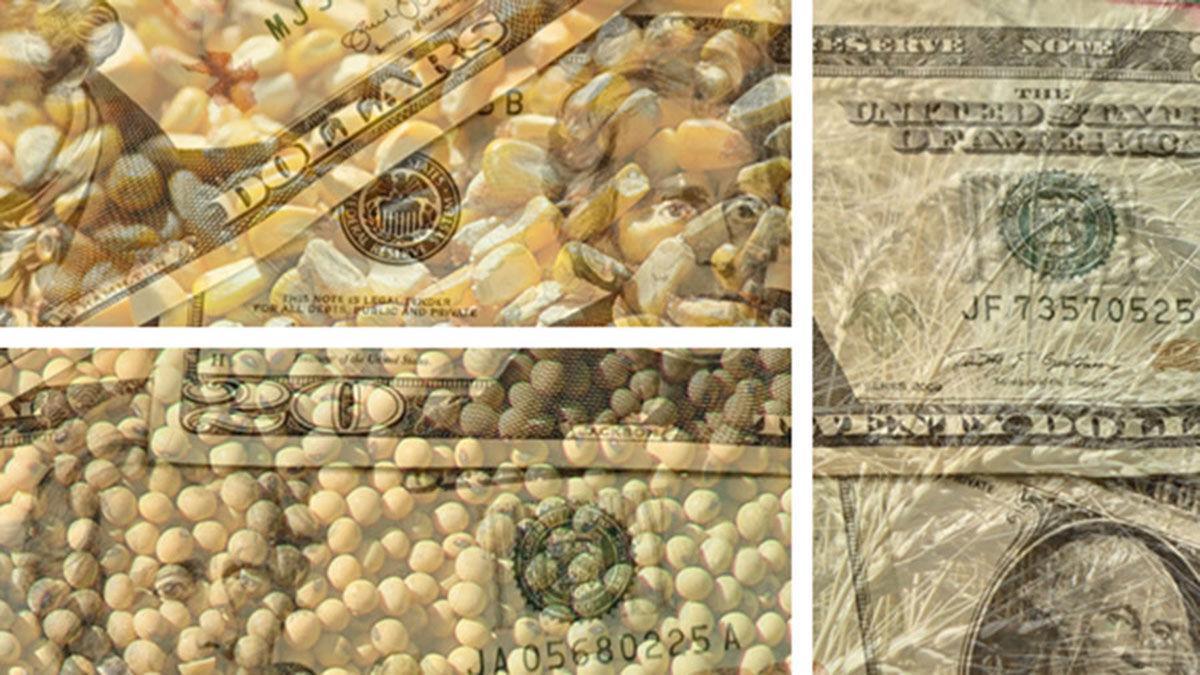 MOney over grain