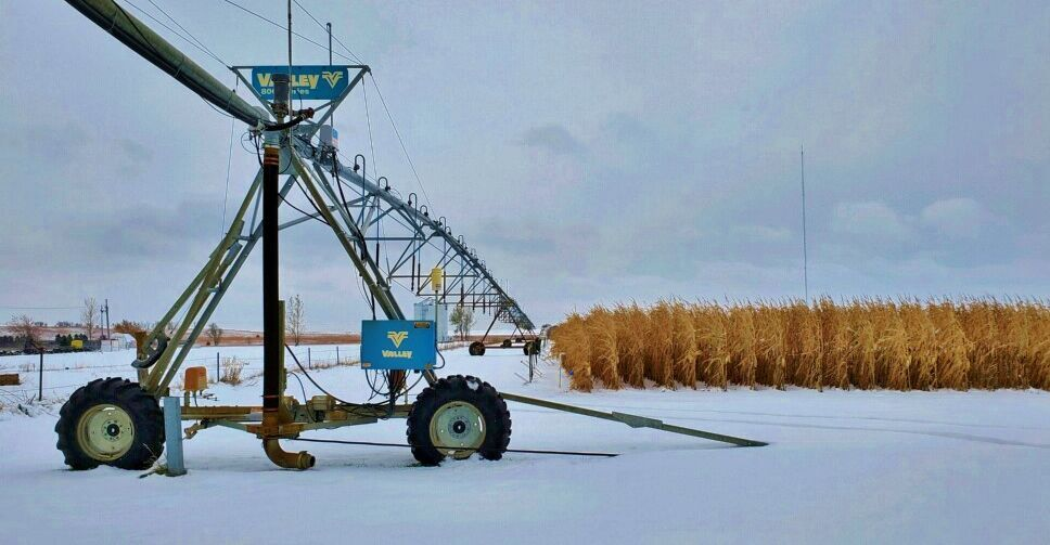 Irrigation pivot system in cornfield