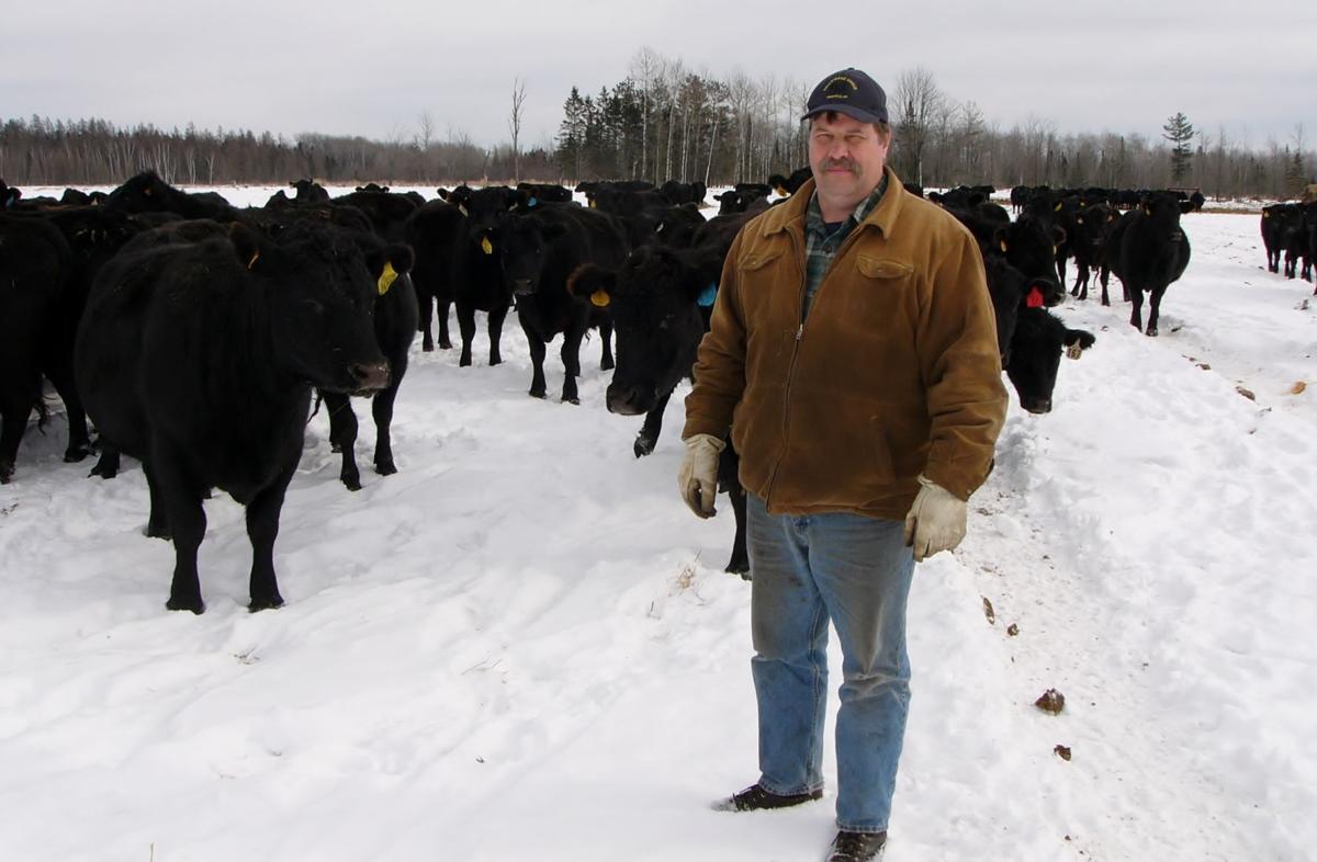 Kurt Hallstrand with cow herd