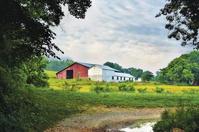 "Beauty of the Farm: ""Early Morning Walk"" by Betsy O'Neal of Cabool, Mo."