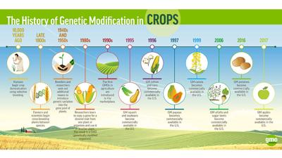 GMOA History of GM in Crops-1200x600px-January2018-v1