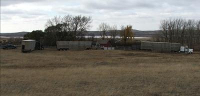 Loading cattle
