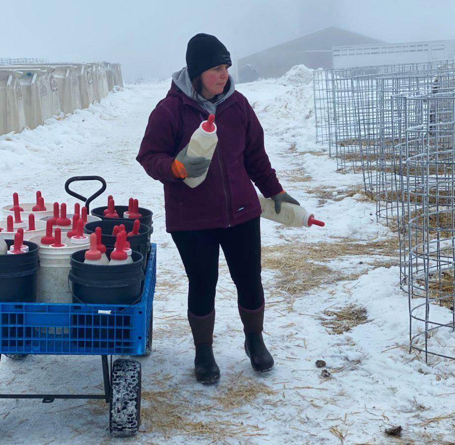Krista Dolan prepares to feed calves