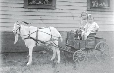 Yesteryear Goat Cart