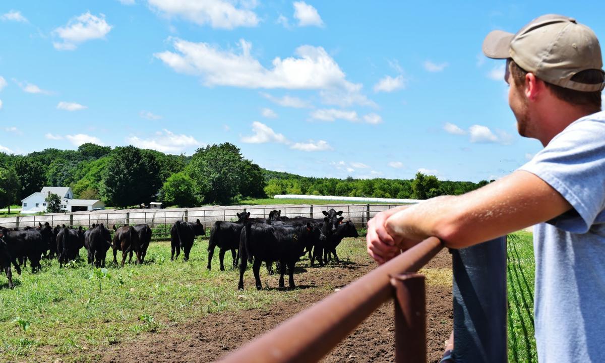Aaron Rathke checking Angus heifers