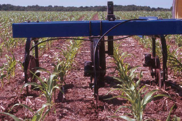 Side-dress nitrogen on corn (copy)