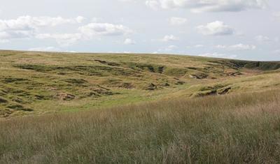 sandhills grassland