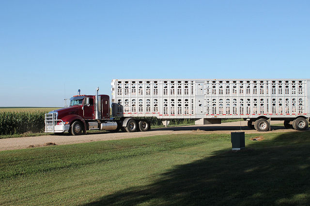 Truck photo from Pork Checkoff