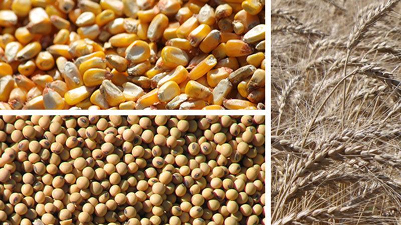 Grain Market Corn Beans Wheat
