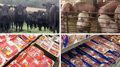 Split Screen Cattle Hogs and meat products