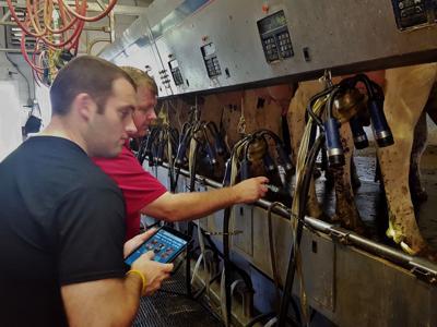 Eric Ronk and Scott Gunderson check for digital dermatitis