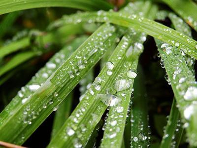Rain on leaves