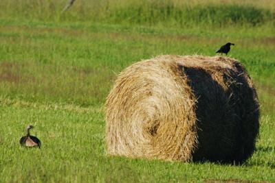 Round bale