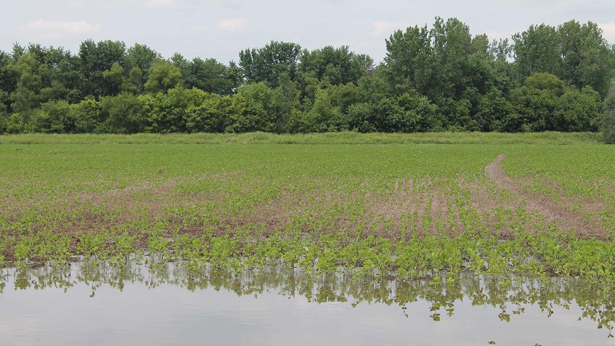 Water standing in field_Missouri