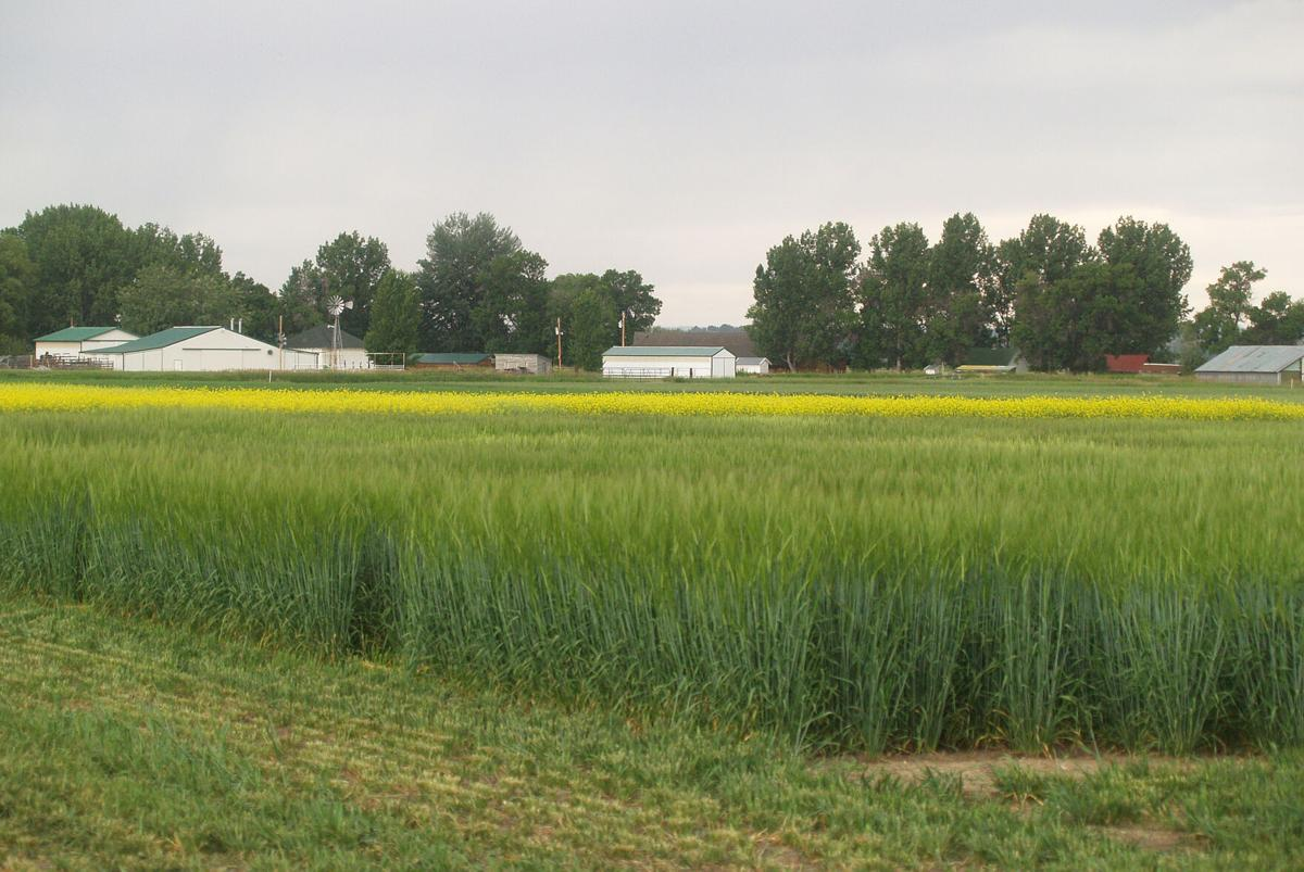 Crops contribute to ag economy