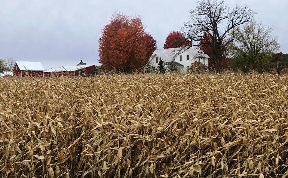 Farm in fall with cornfield