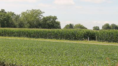 Corn and soybean field IL 2020
