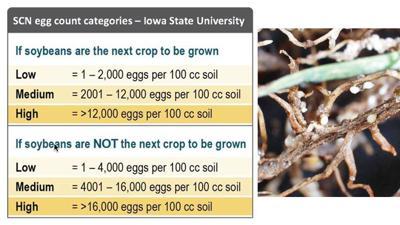 SCN soil sample egg count