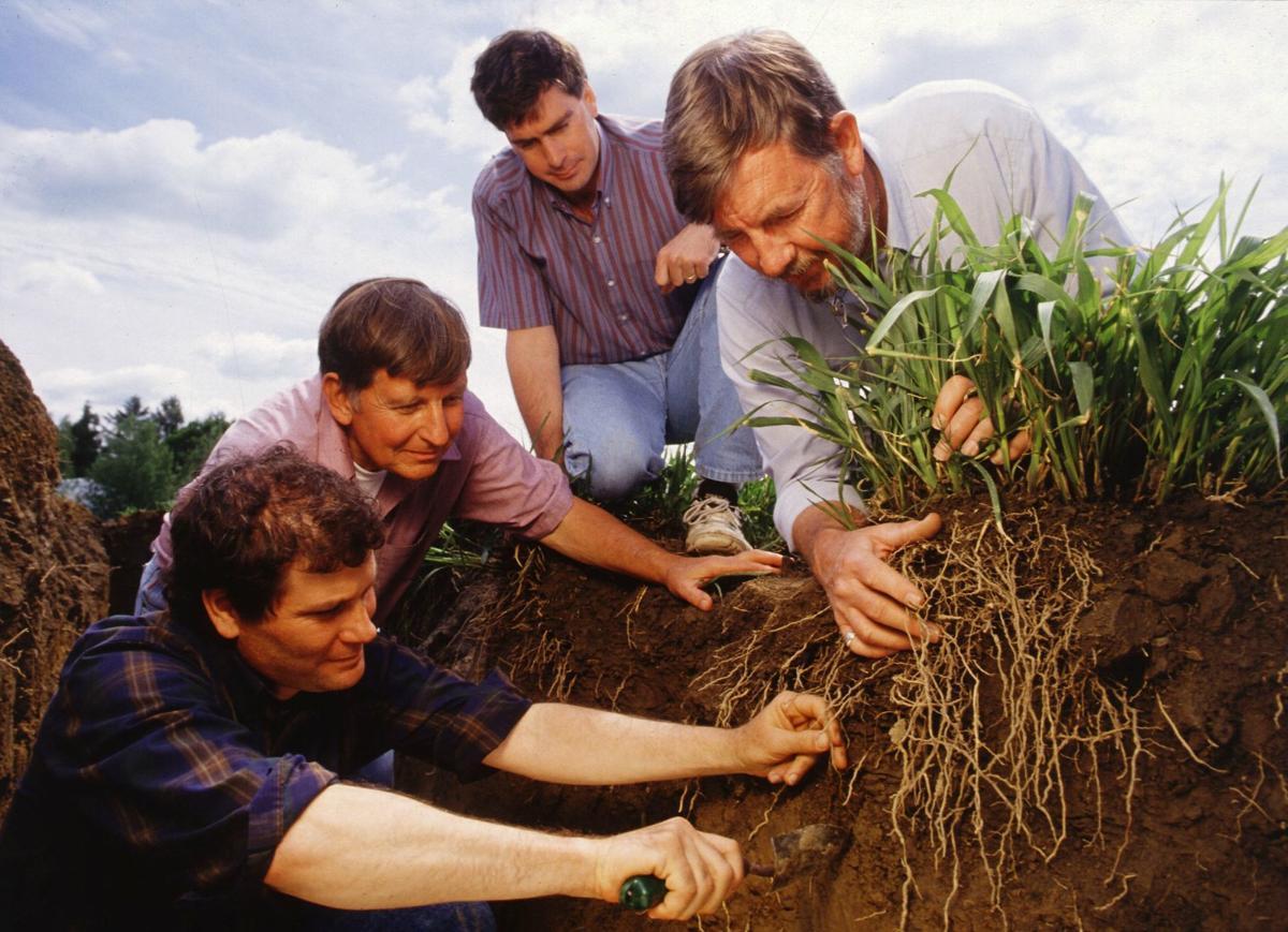 Scientists excavate roots