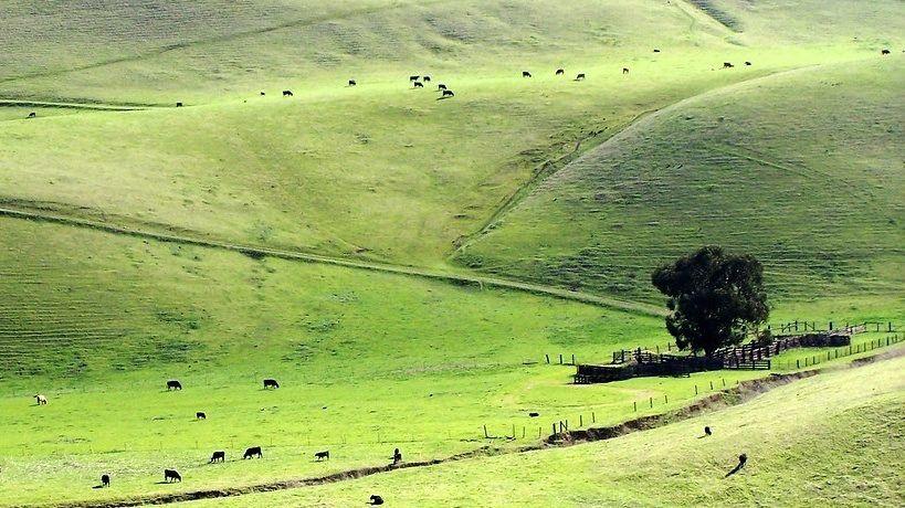 Rangeland in drought