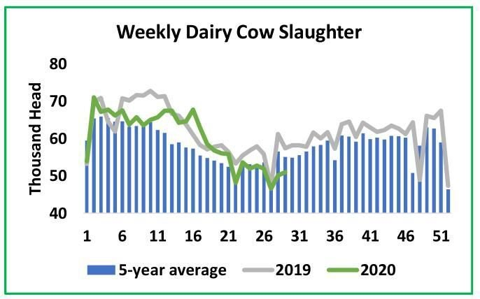 Weekly Dairy Cow Slaughter