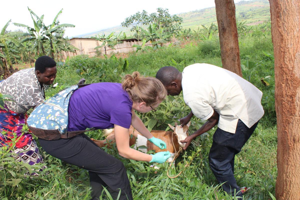 Katie Rwanda goat