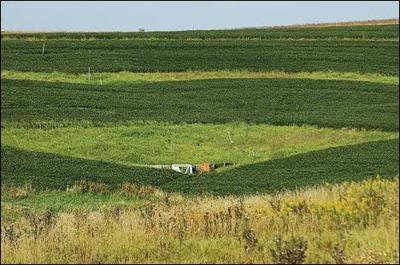 Patches of prairie stem erosion