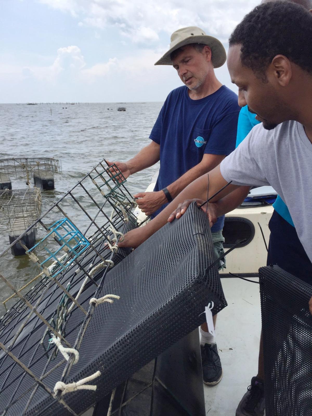 Off-bottom oyster aquaculture training