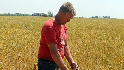 Craig Finke inspects heads on wheat plants
