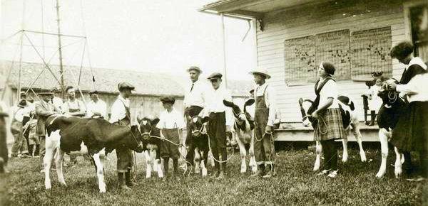 Children show their heifers in 1925