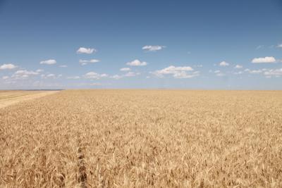 MT crop