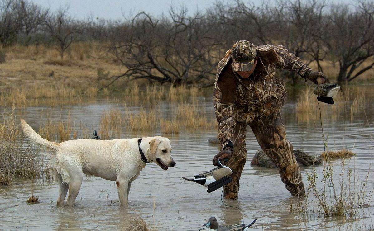 Hunter with dog picks up bird
