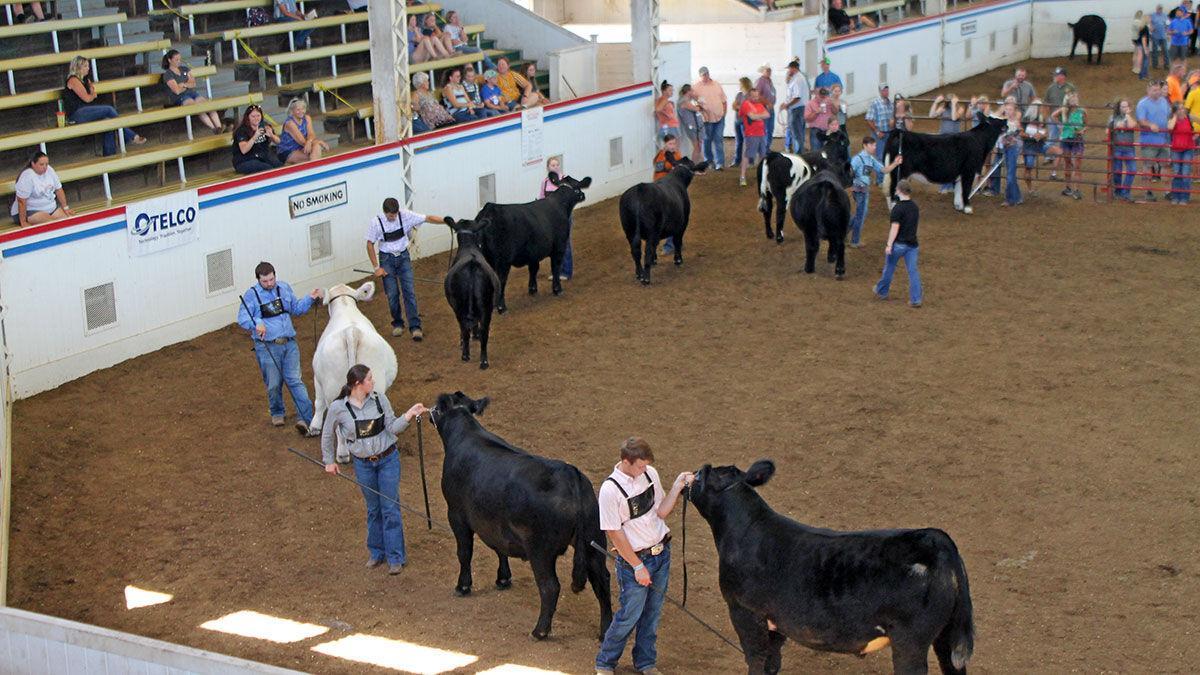 Youth livestock exhibitors