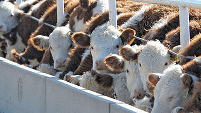 animal disease traceability program