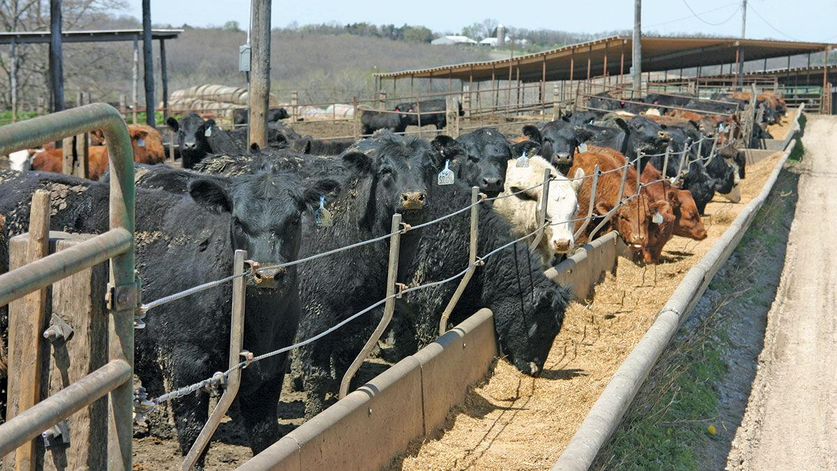 Feed costs cattle at feeder