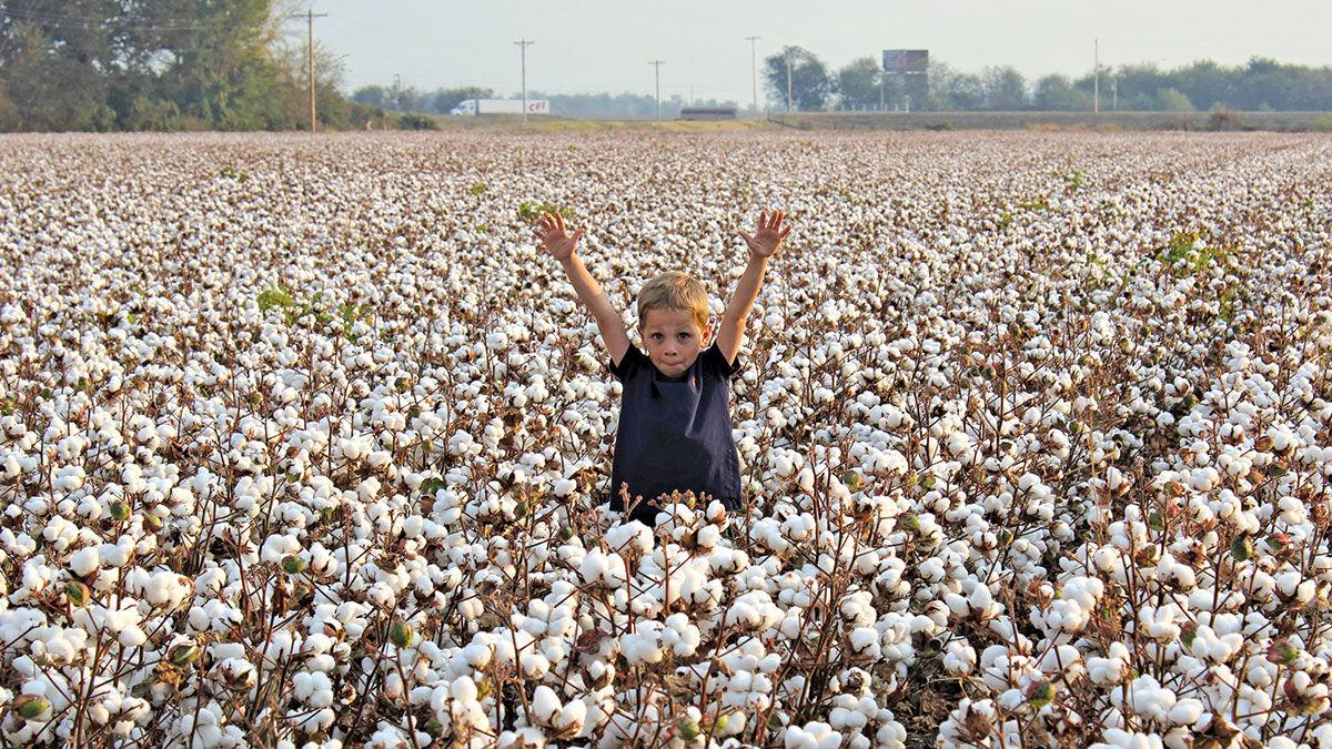 child plays in a cotton field